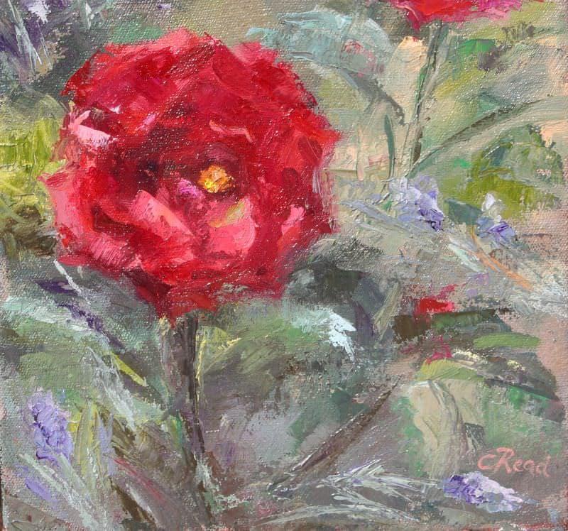 A Valentines Rose