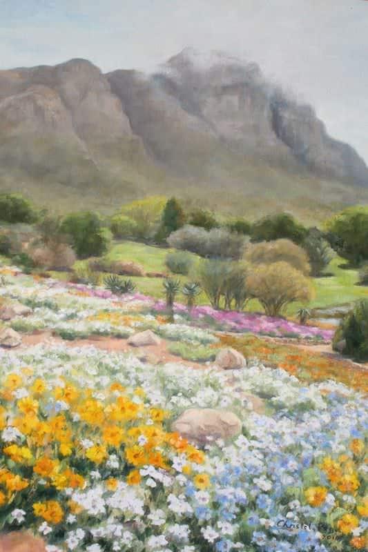 Kirstenbosch Spring